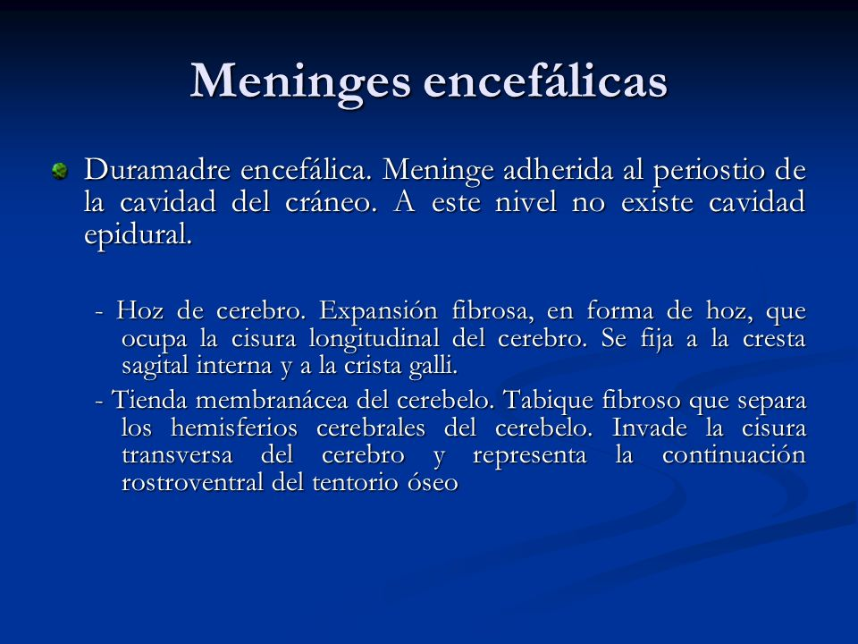 Meninges encefálicasDuramadre encefálica. Meninge adherida al periostio de la cavidad del cráneo. A este nivel no existe cavidad epidural.