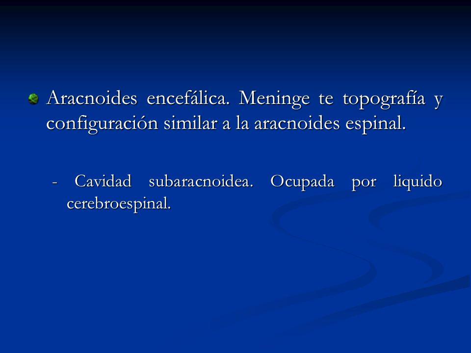 Aracnoides encefálica