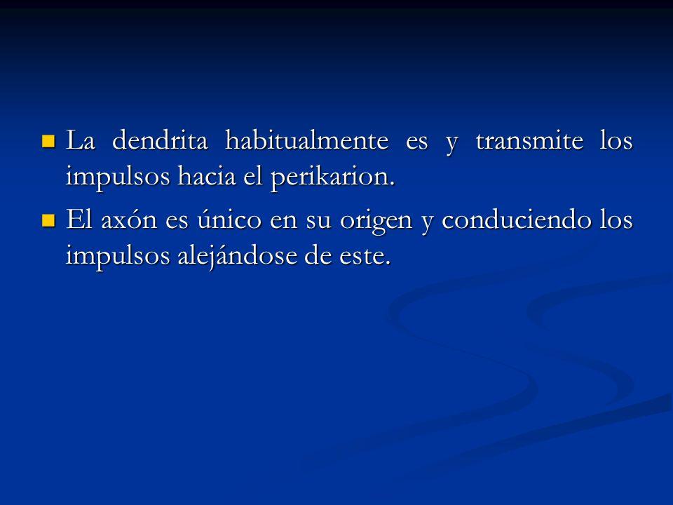 La dendrita habitualmente es y transmite los impulsos hacia el perikarion.