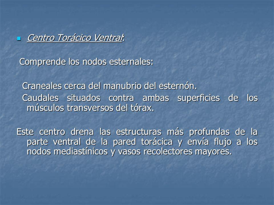Centro Torácico Ventral: