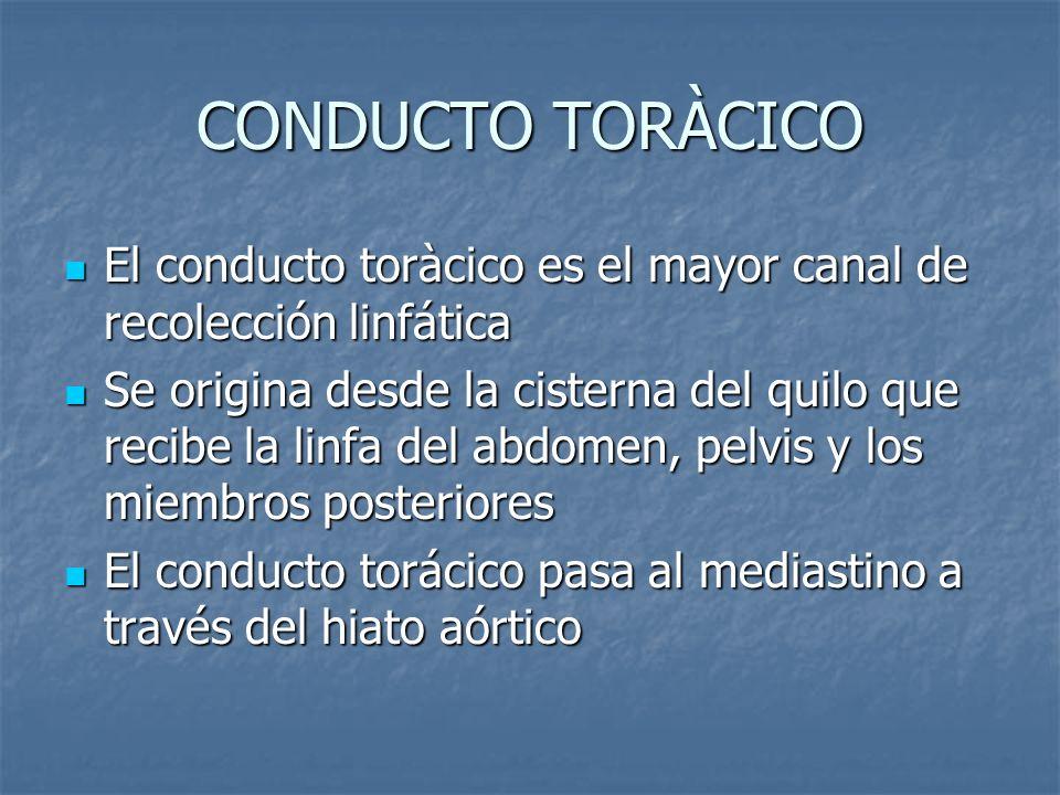 CONDUCTO TORÀCICO El conducto toràcico es el mayor canal de recolección linfática.