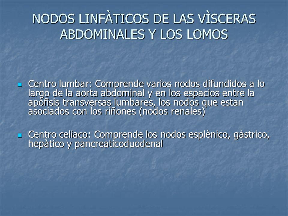 NODOS LINFÀTICOS DE LAS VÌSCERAS ABDOMINALES Y LOS LOMOS