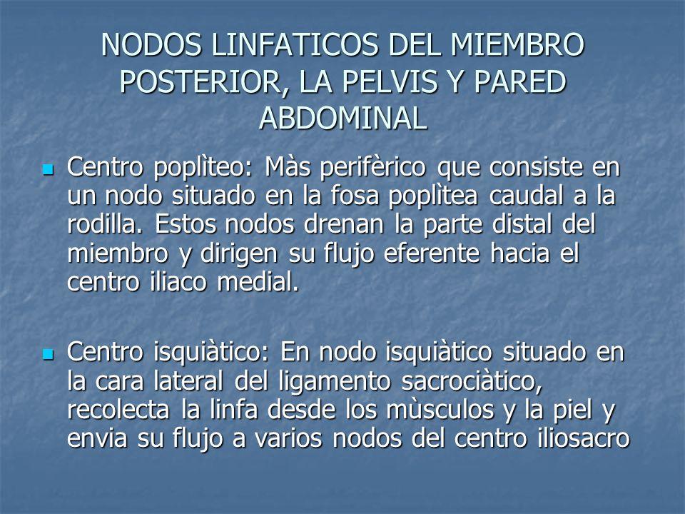 NODOS LINFATICOS DEL MIEMBRO POSTERIOR, LA PELVIS Y PARED ABDOMINAL