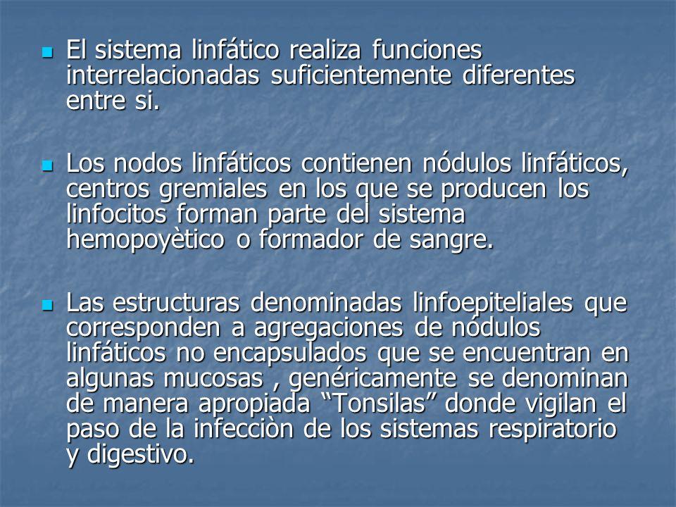 El sistema linfático realiza funciones interrelacionadas suficientemente diferentes entre si.