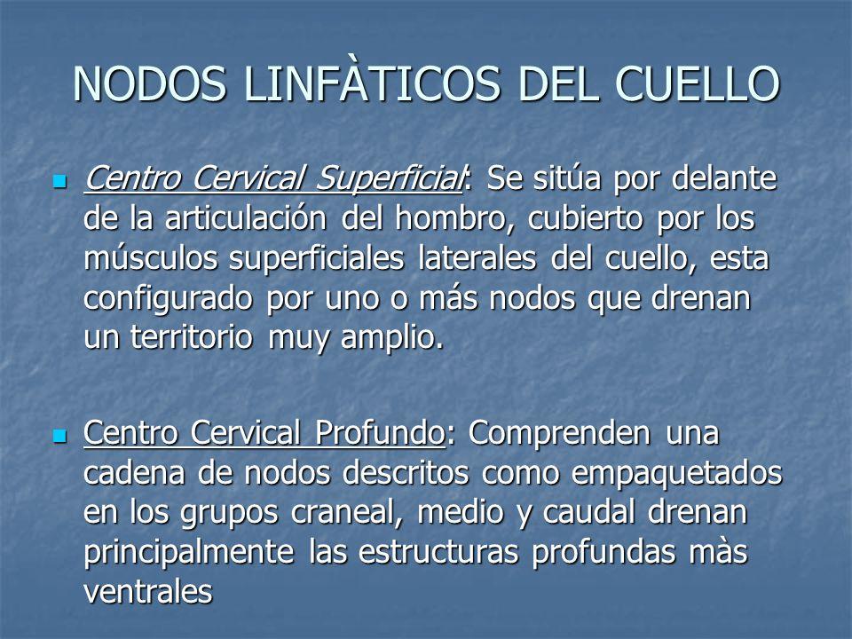 NODOS LINFÀTICOS DEL CUELLO