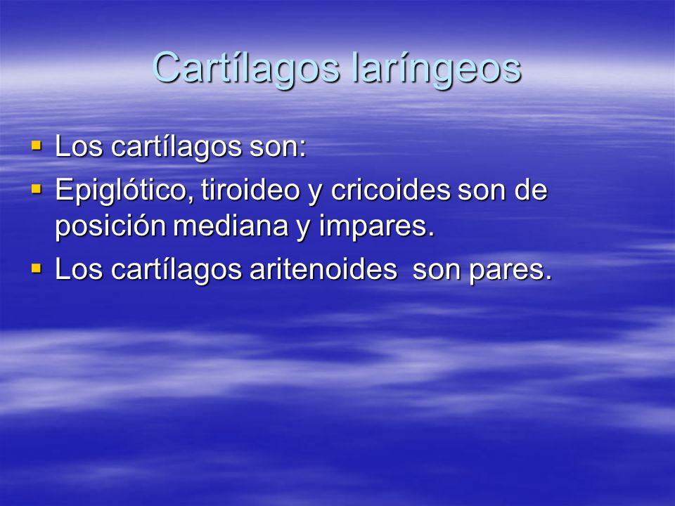 Cartílagos laríngeos Los cartílagos son: