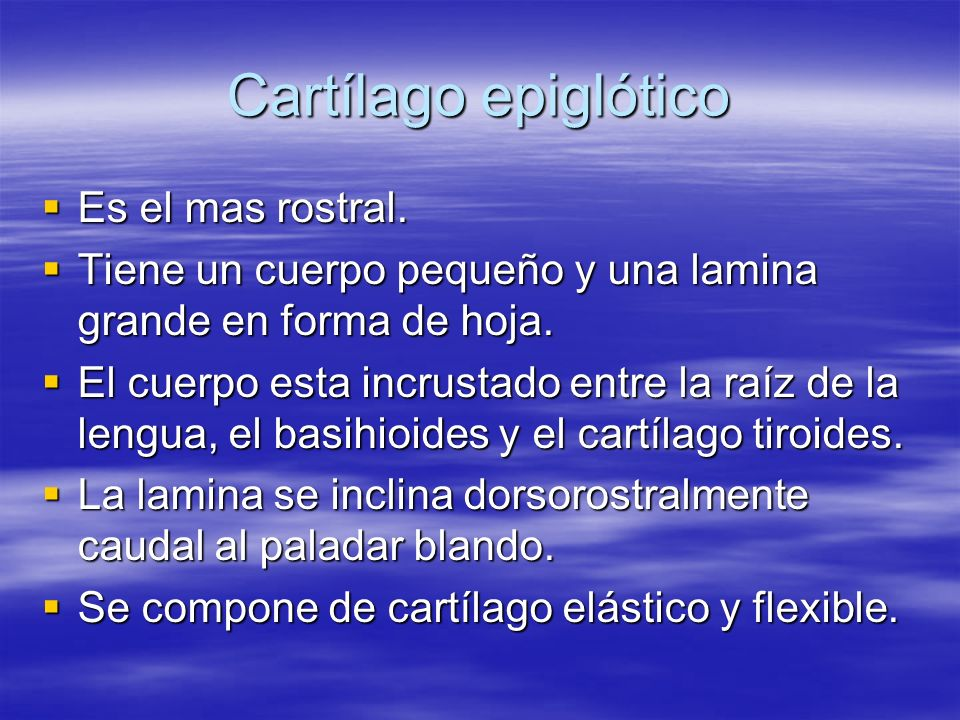 Cartílago epiglótico Es el mas rostral.