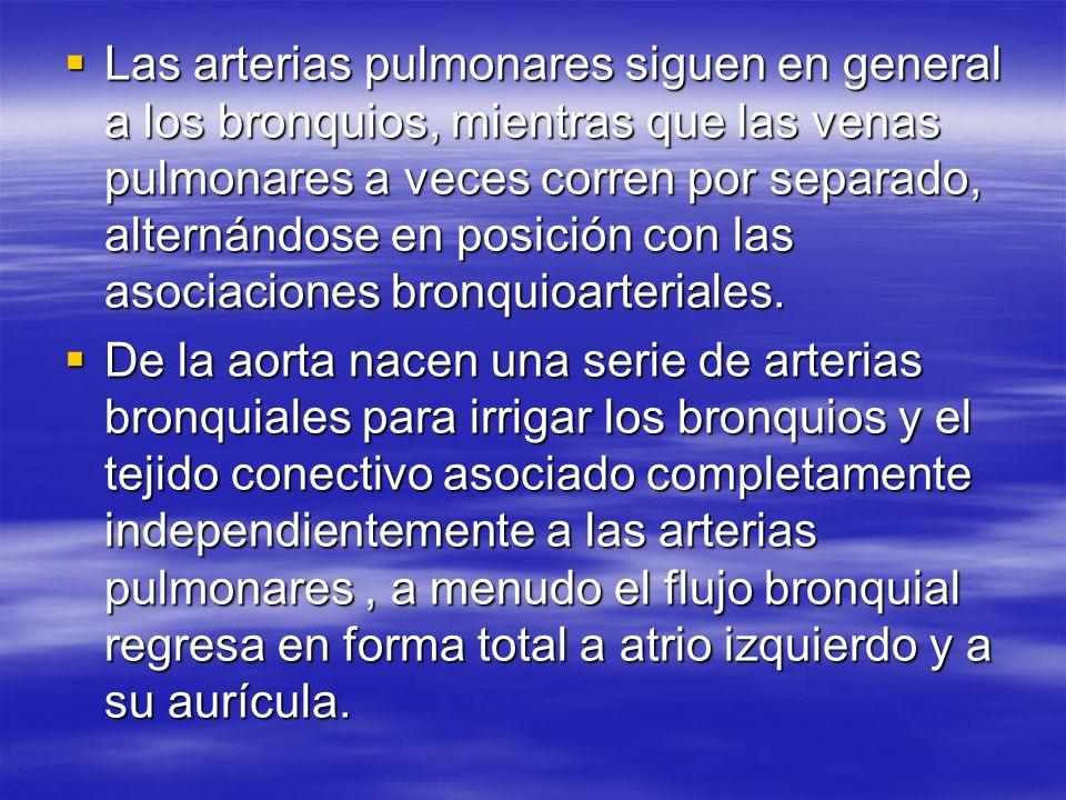 Las arterias pulmonares siguen en general a los bronquios, mientras que las venas pulmonares a veces corren por separado, alternándose en posición con las asociaciones bronquioarteriales.
