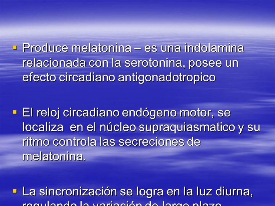 Produce melatonina – es una indolamina relacionada con la serotonina, posee un efecto circadiano antigonadotropico