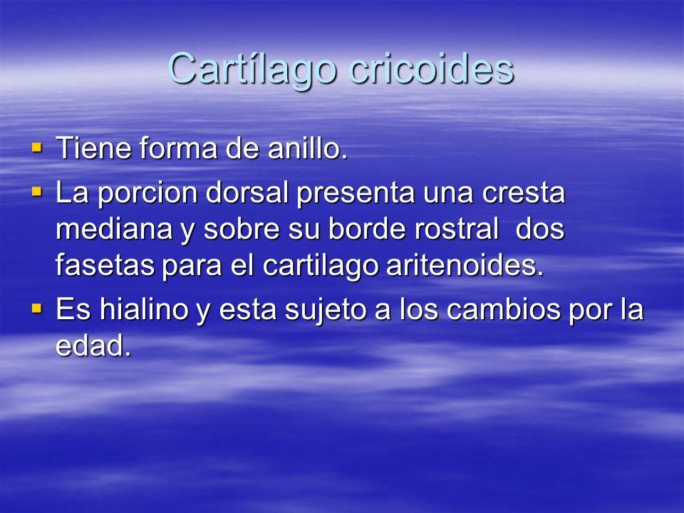 Cartílago cricoides Tiene forma de anillo.