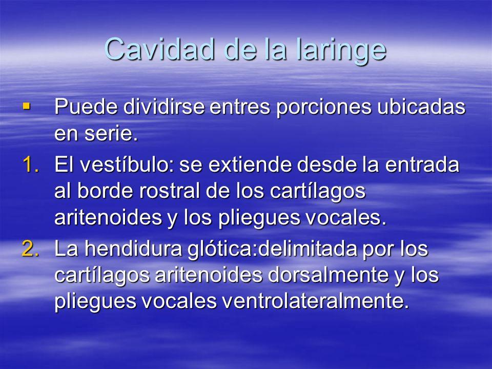 Cavidad de la laringePuede dividirse entres porciones ubicadas en serie.