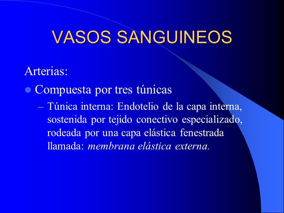 VASOS SANGUINEOS Arterias: Compuesta por tres túnicas