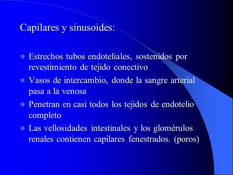 Capilares y sinusoides: