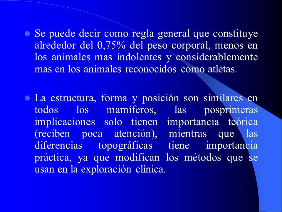 Se puede decir como regla general que constituye alrededor del 0,75% del peso corporal, menos en los animales mas indolentes y considerablemente mas en los animales reconocidos como atletas.