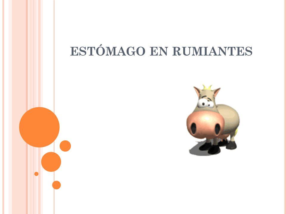 ESTÓMAGO EN RUMIANTES. - ppt video online descargar
