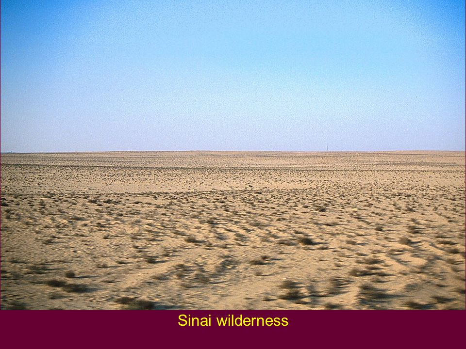 Sinai wilderness Sinai wilderness