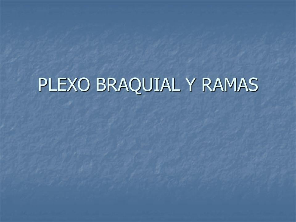 PLEXO BRAQUIAL Y RAMAS