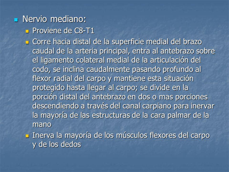 Nervio mediano: Proviene de C8-T1