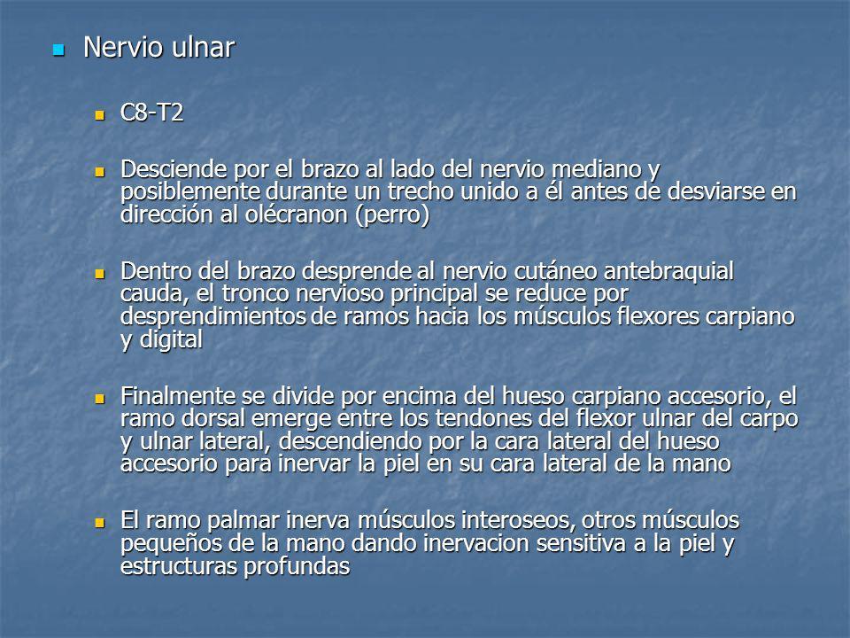 Nervio ulnarC8-T2.