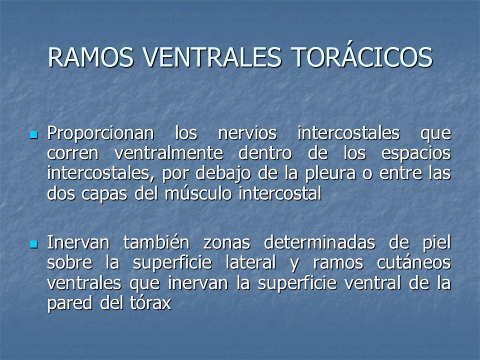 RAMOS VENTRALES TORÁCICOS