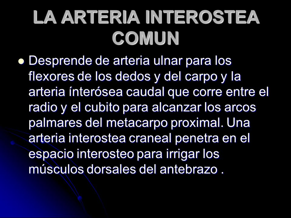 LA ARTERIA INTEROSTEA COMUN