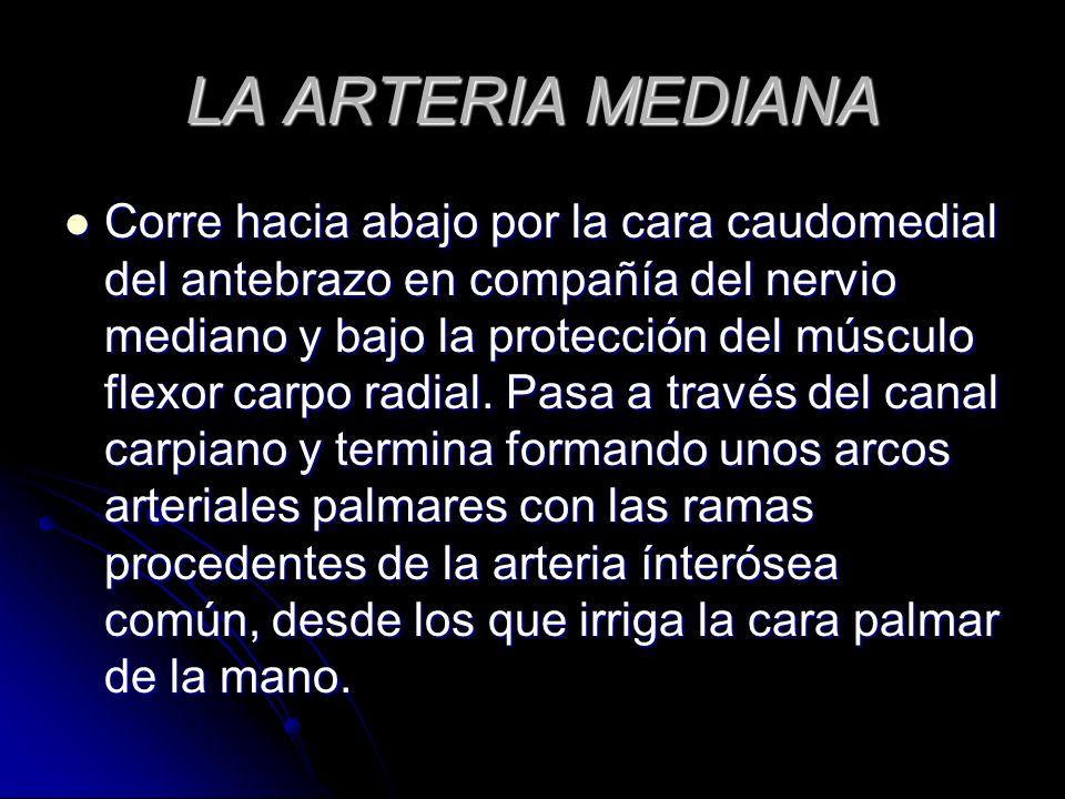 LA ARTERIA MEDIANA