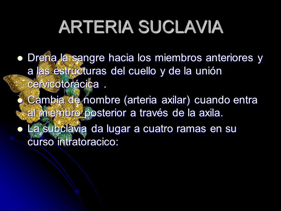 ARTERIA SUCLAVIA Drena la sangre hacia los miembros anteriores y a las estructuras del cuello y de la unión cervicotorácica .