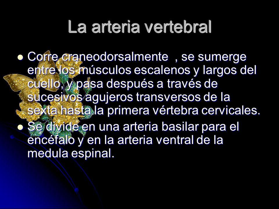 La arteria vertebral