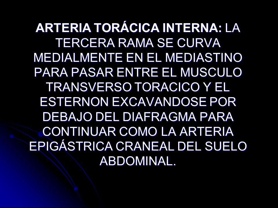 ARTERIA TORÁCICA INTERNA: LA TERCERA RAMA SE CURVA MEDIALMENTE EN EL MEDIASTINO PARA PASAR ENTRE EL MUSCULO TRANSVERSO TORACICO Y EL ESTERNON EXCAVANDOSE POR DEBAJO DEL DIAFRAGMA PARA CONTINUAR COMO LA ARTERIA EPIGÁSTRICA CRANEAL DEL SUELO ABDOMINAL.