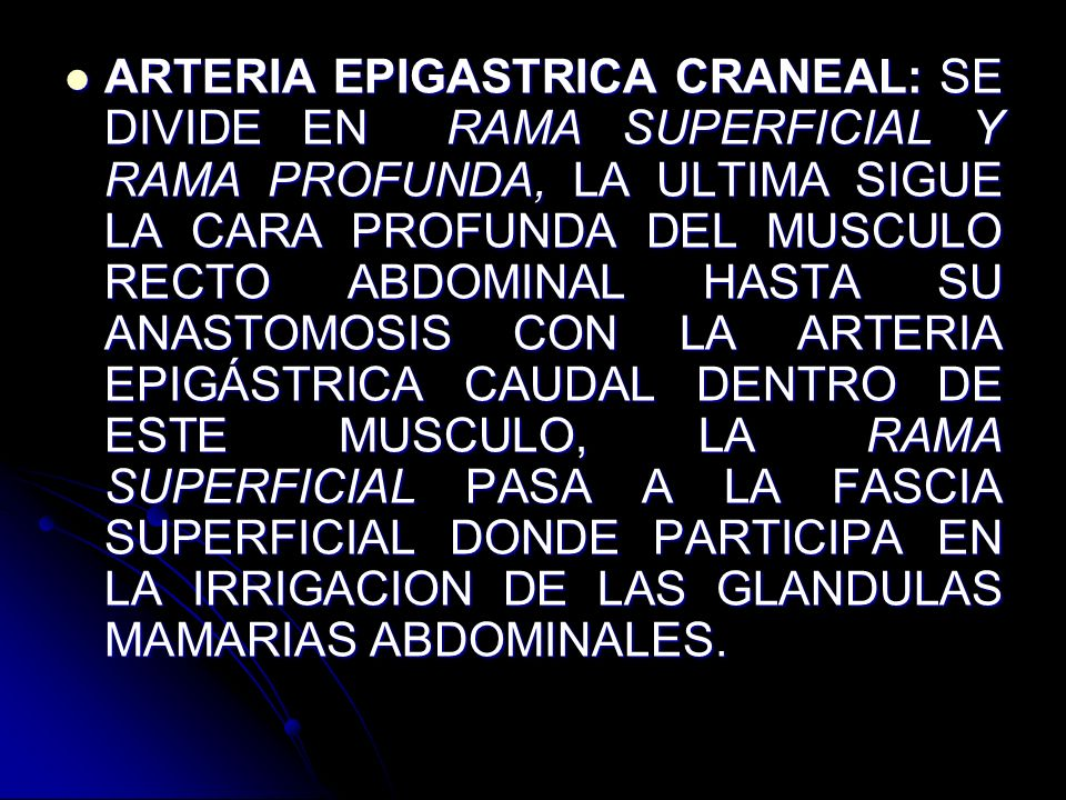 ARTERIA EPIGASTRICA CRANEAL: SE DIVIDE EN RAMA SUPERFICIAL Y RAMA PROFUNDA, LA ULTIMA SIGUE LA CARA PROFUNDA DEL MUSCULO RECTO ABDOMINAL HASTA SU ANASTOMOSIS CON LA ARTERIA EPIGÁSTRICA CAUDAL DENTRO DE ESTE MUSCULO, LA RAMA SUPERFICIAL PASA A LA FASCIA SUPERFICIAL DONDE PARTICIPA EN LA IRRIGACION DE LAS GLANDULAS MAMARIAS ABDOMINALES.