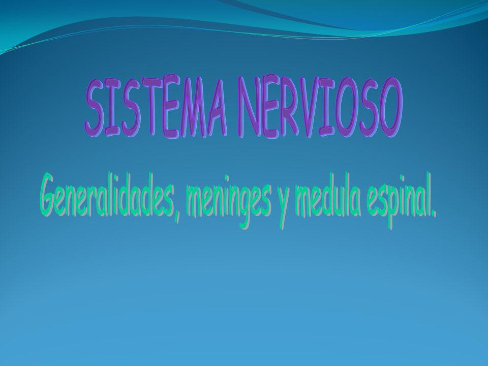 Generalidades, meninges y medula espinal.