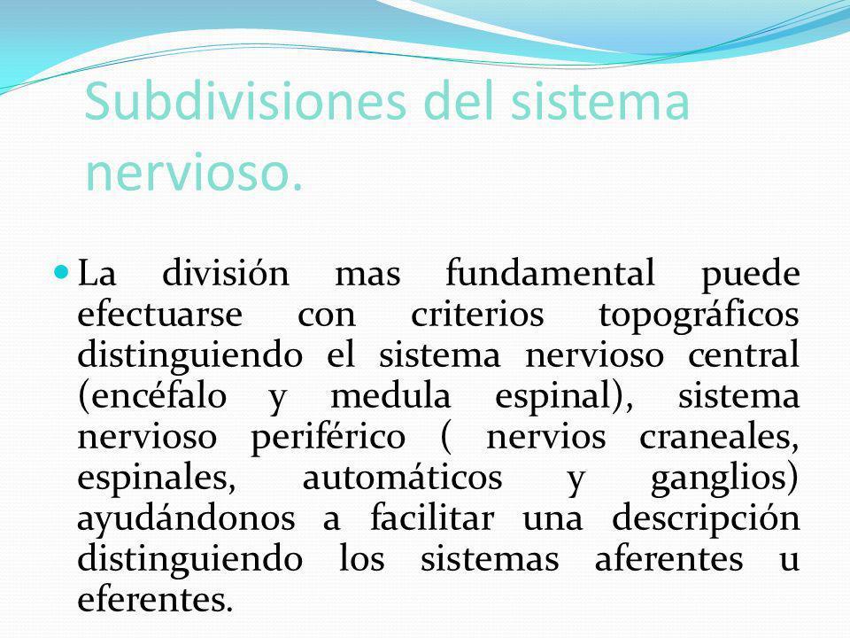 Subdivisiones del sistema nervioso.