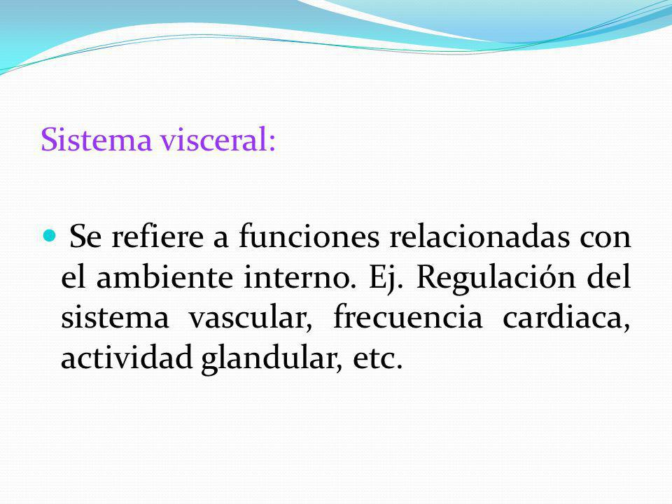 Sistema visceral: