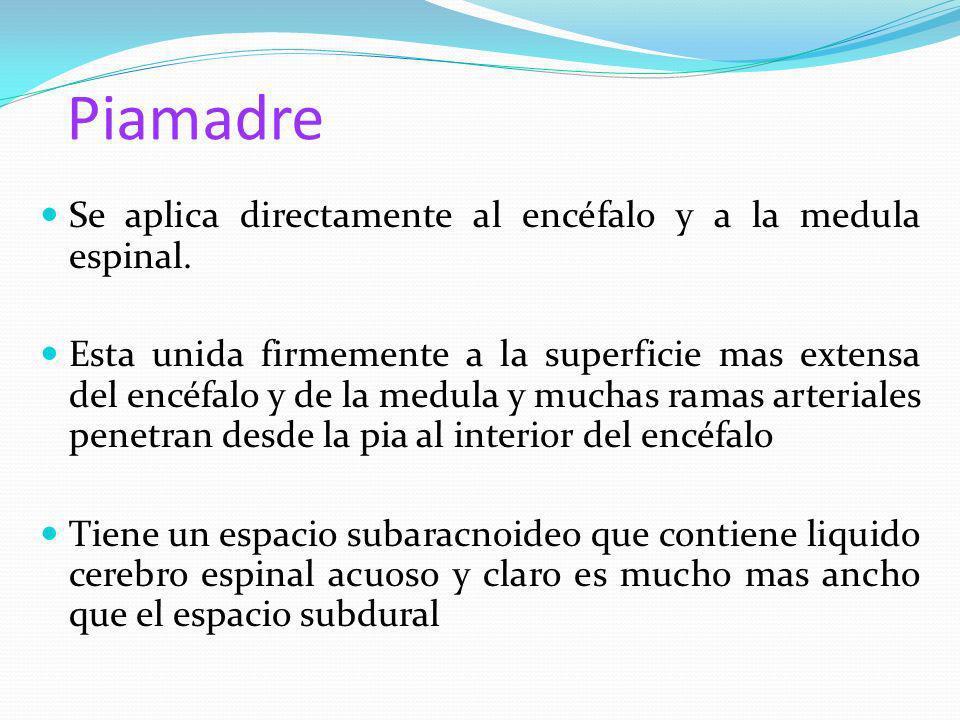Piamadre Se aplica directamente al encéfalo y a la medula espinal.