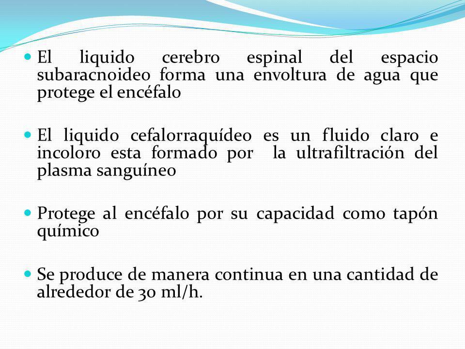 El liquido cerebro espinal del espacio subaracnoideo forma una envoltura de agua que protege el encéfalo