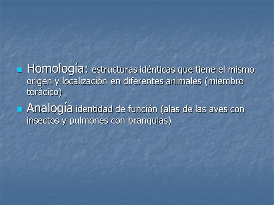 Homología: estructuras idénticas que tiene el mismo origen y localización en diferentes animales (miembro torácico)