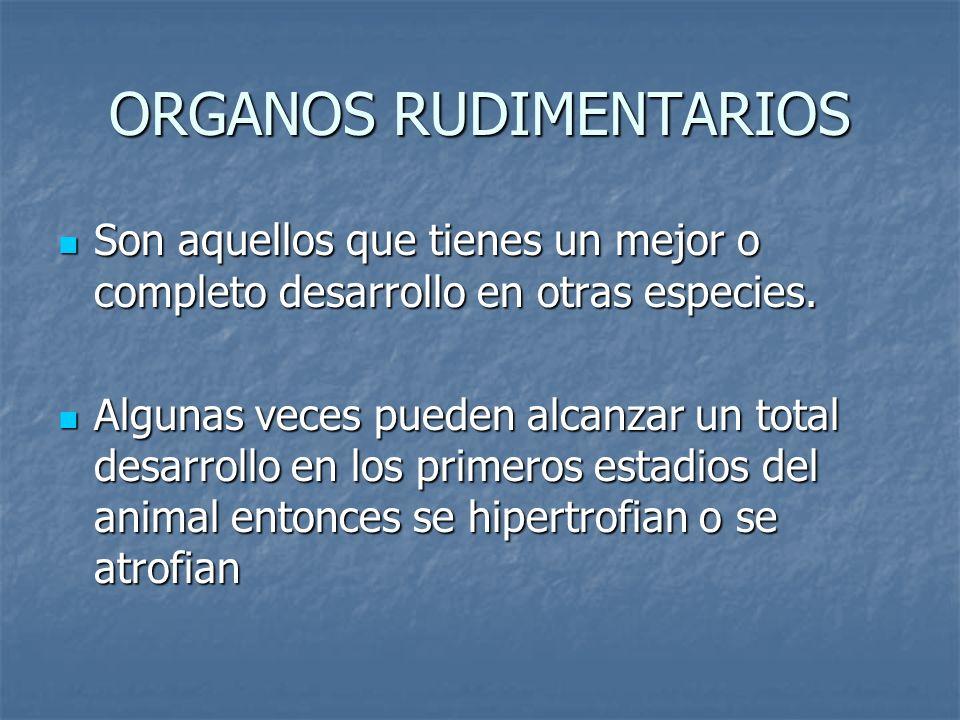 ORGANOS RUDIMENTARIOS