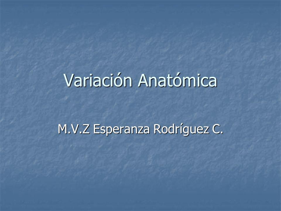 M.V.Z Esperanza Rodríguez C.