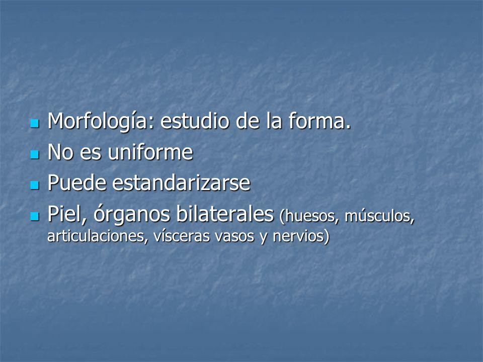 Morfología: estudio de la forma.