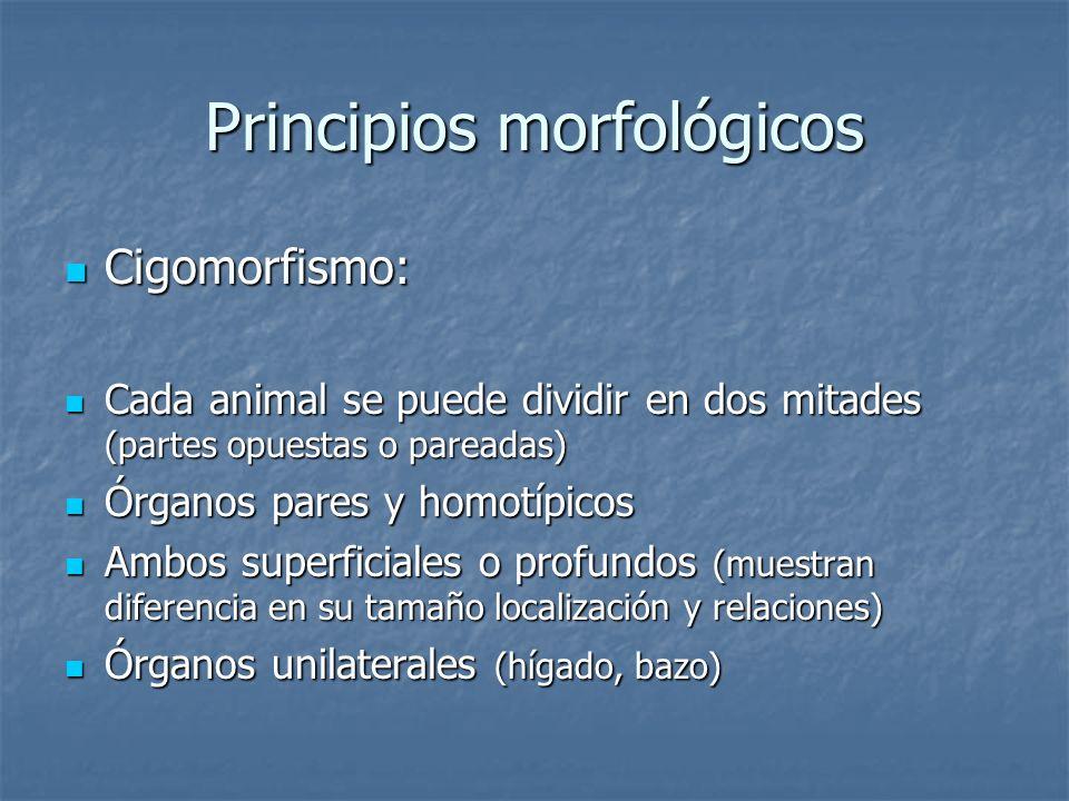 Principios morfológicos