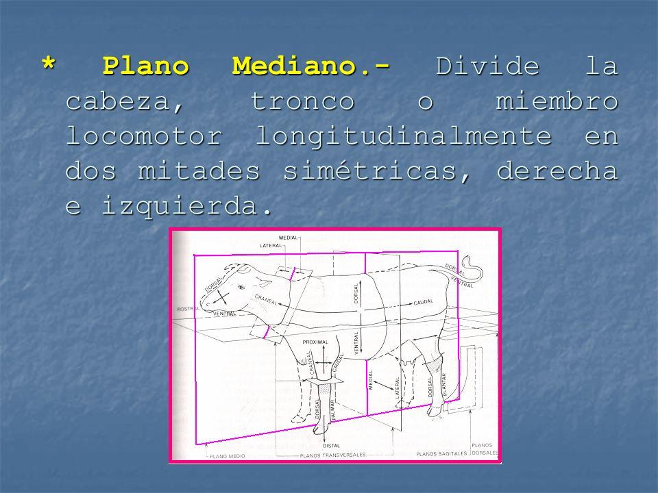 * Plano Mediano.- Divide la cabeza, tronco o miembro locomotor longitudinalmente en dos mitades simétricas, derecha e izquierda.