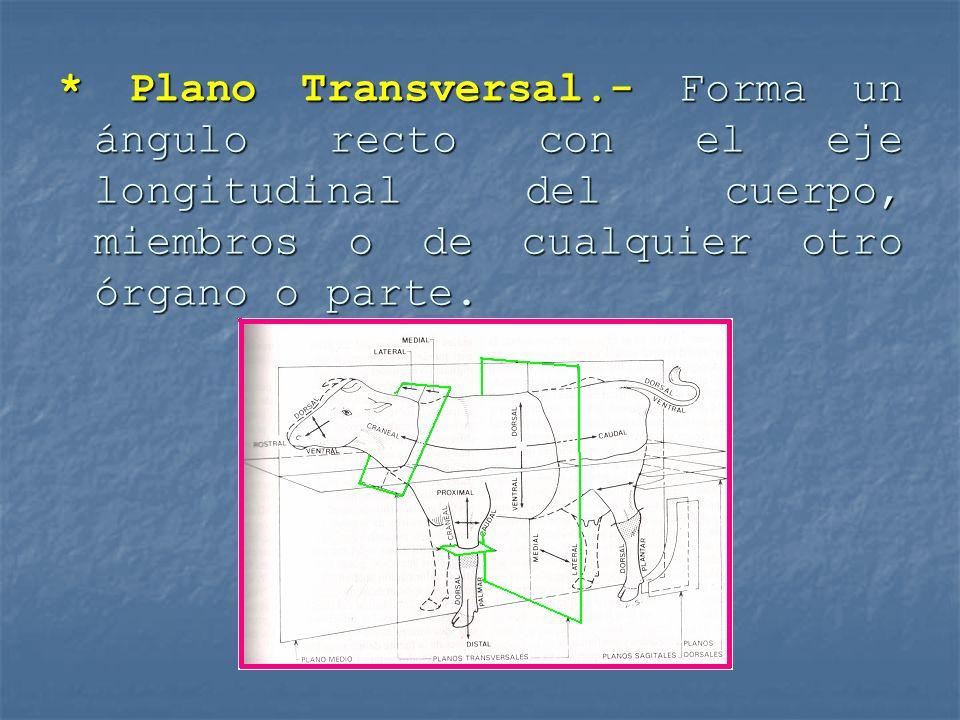 * Plano Transversal.- Forma un ángulo recto con el eje longitudinal del cuerpo, miembros o de cualquier otro órgano o parte.