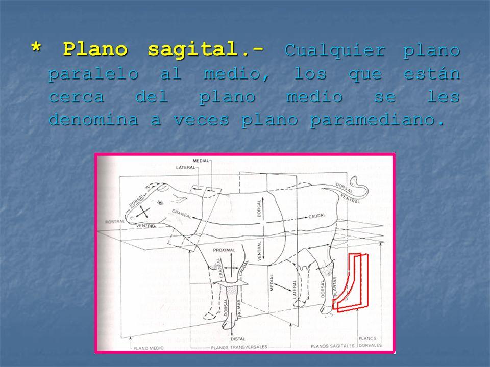 * Plano sagital.- Cualquier plano paralelo al medio, los que están cerca del plano medio se les denomina a veces plano paramediano.