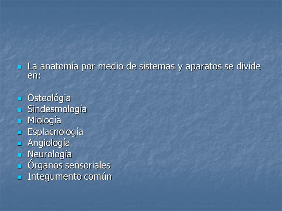 La anatomía por medio de sistemas y aparatos se divide en:
