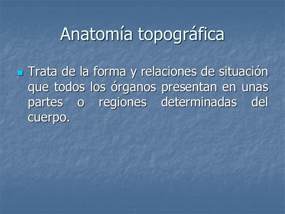 Anatomía topográficaTrata de la forma y relaciones de situación que todos los órganos presentan en unas partes o regiones determinadas del cuerpo.
