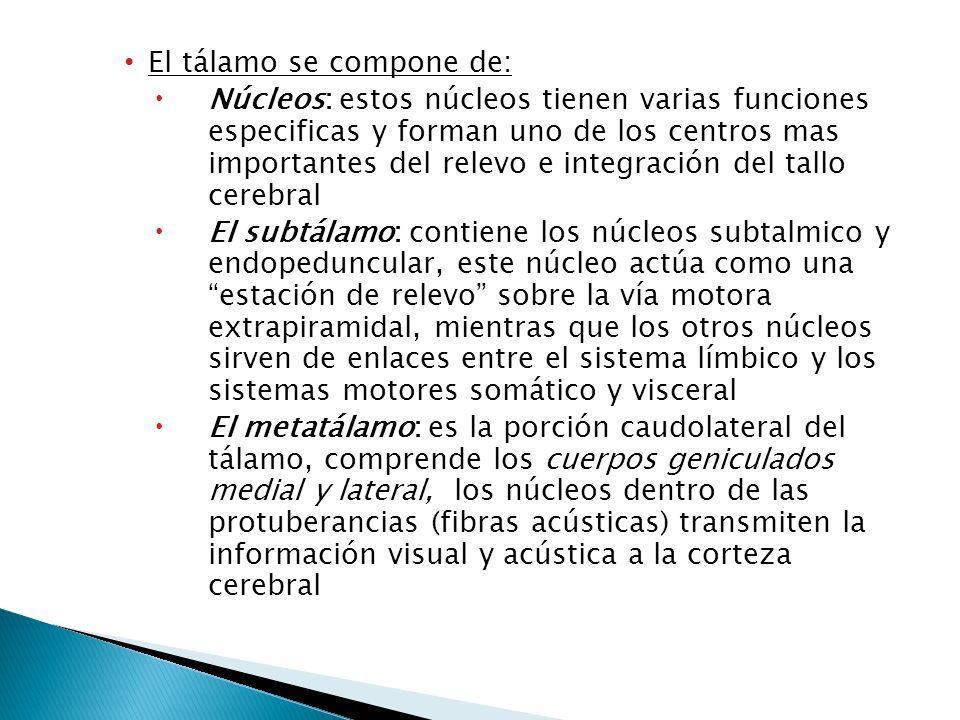 El tálamo se compone de: