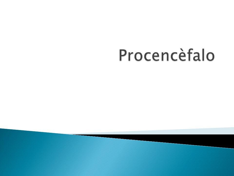 Procencèfalo