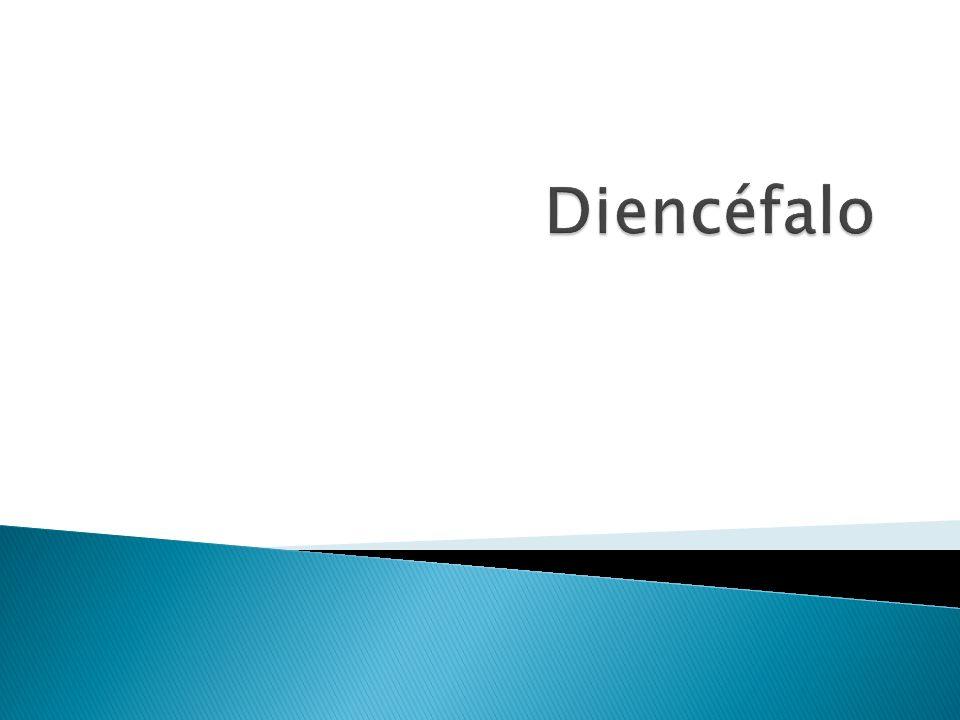 Diencéfalo