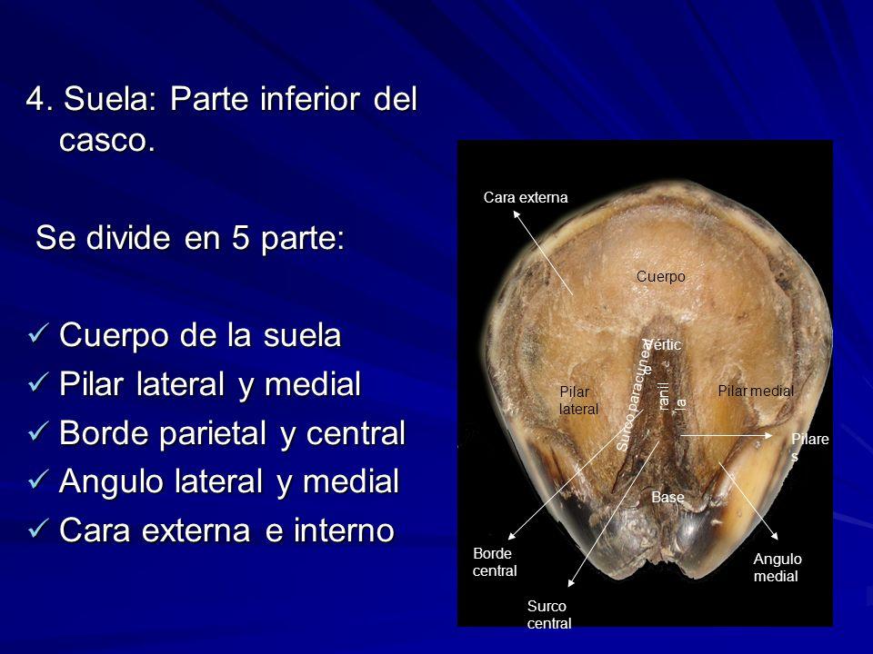 4. Suela: Parte inferior del casco.