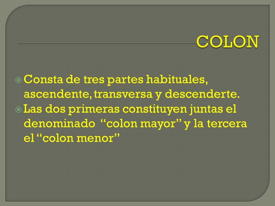 COLON Consta de tres partes habituales, ascendente, transversa y descenderte.
